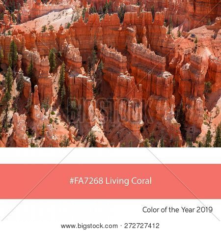 as an example of the trend colour of the year 2019, Living Coral, with corresponding colour hex code.