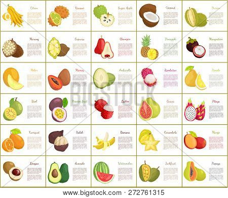 Citron And Kiwano Posters Set Vector. Salak And Kumquat, Papaya And Avocado Watermelon And Bael. Lyc