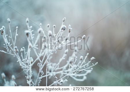 Frost On The Branches In Winter. Winter Landscape.winter Background With Snow Branches Tree Leaves .