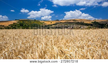 Summer Landscape With Wheat Field, Hills And Clouds