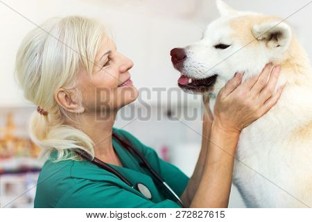 Female veterinarian examining a dog in her office