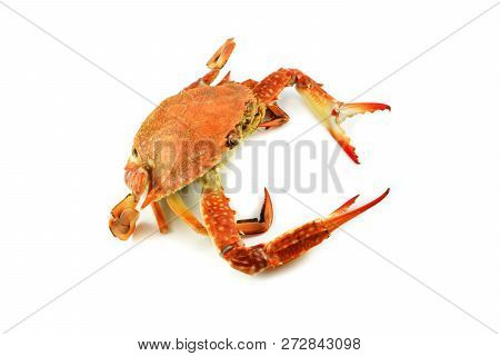 steam crab isolated on white background / cooked crab steamed seafood ready to serve / BLUE SWIMMING CRAB