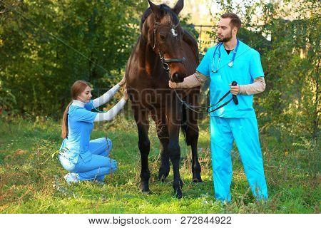 Veterinarians In Uniform Examining Beautiful Brown Horse Outdoors