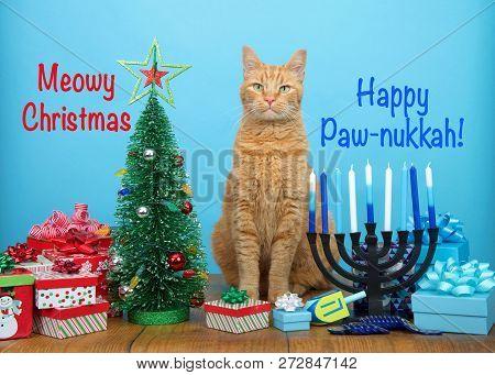 Orange Tabby Cat Sitting Between A Christmas Tree And A Hanukkah Menorah, Looking At Viewer. Many Mu