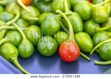 Red Cherry Peppers With With Green. Scinentific Name Is (capsicum Frutescens. Linn.)