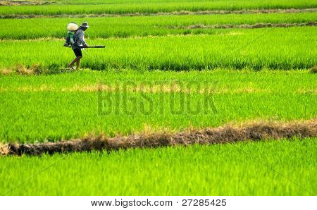 It is a farmer spray insecticide with traditional way on the farm.