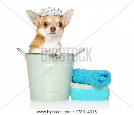 Care And Washing Of A Small Chihuahua Dog On White Background. Baby Animal Theme