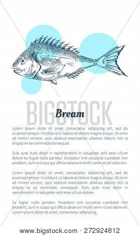 Bream Fish Seafood Vector Hand Drawn Illustration. Decorative Icon Of Ocean Animal Isolated On White