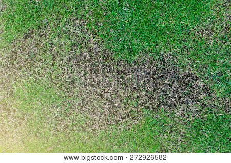 Grass Texture. Grass Background. Patchy Grass, Lawn In Bad Condition And Need Maintaining, Pests And