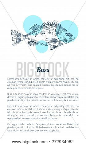 Bass Or Bream Marine Creature As Seafood Flat Vector Illustration In Sketch Style. Nautical Informat