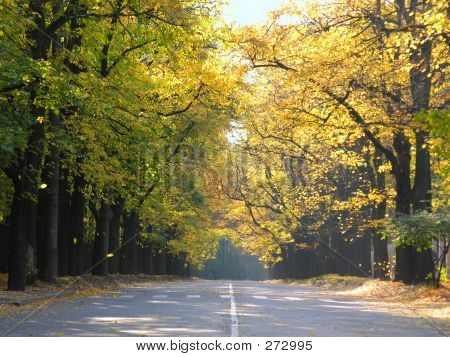 Road With Autumn