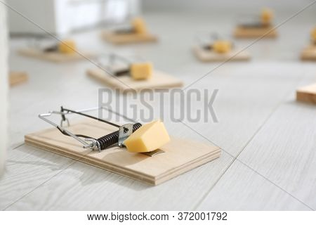 Mousetraps With Pieces Of Cheese On Floor Indoors. Pest Control