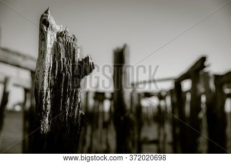 Weathered Old Wharf Poles With Focus On Foreground And Blurry Background In Monochrome.