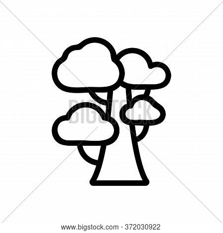 Eucalyptus Tree Icon Vector. Eucalyptus Tree Sign. Isolated Contour Symbol Illustration