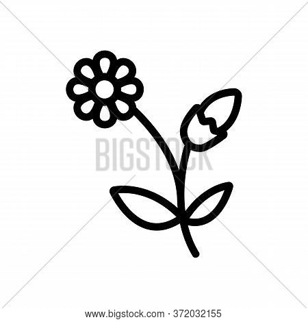 Chamomile Blooming Flower Icon Vector. Chamomile Blooming Flower Sign. Isolated Contour Symbol Illus