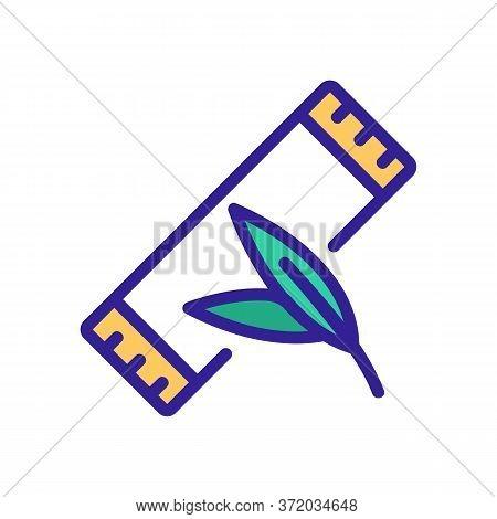 Eucalyptus Bubble Gum Package Icon Vector. Eucalyptus Bubble Gum Package Sign. Color Symbol Illustra