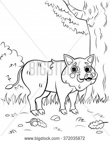 Coloring Page Outline Of Cute Cartoon Hog Or Boar. Vector Image With Nature Background. Printable Co