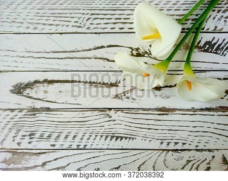 White Calla Lilies Bouquet As Flower Gift Background. Elegant Calla Lilies Flowers On White Wooden T