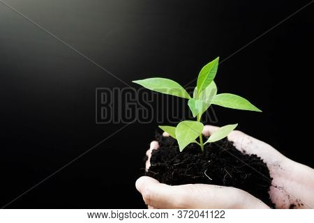 Female Hands Holding Sprout Plant Or Green Tree Seedling With Black Soil. Earth Day Save Environment