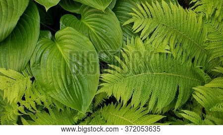 Tropical Leaves Texture Background Of Fern And Jungle Plants. Fresh Green Leaf Backdrop Of Lush Foli