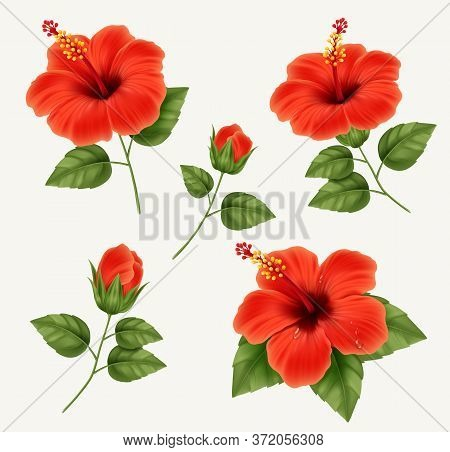 Set Of Realistic Beautiful Hibiscus Flower With Buds And Leaves. Vector Illustration With Hibiscus F