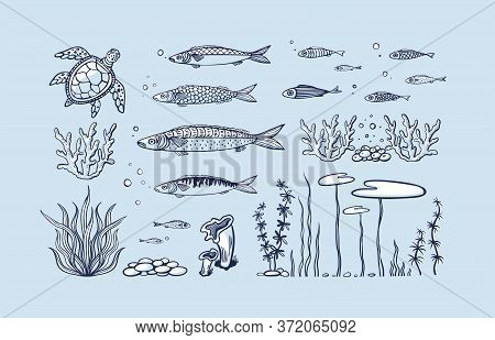 Vector Set Of Sea Animals - Coral, Seaweed, Fish, Turtle, Bubbles And Sea Pebbles. Flat Hand Drawn I