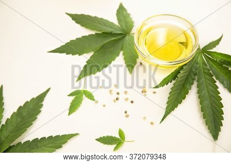 Hemp Extraction Oil In Bowl Near Cannabis Fresh Leaves And Seeds On White Background.