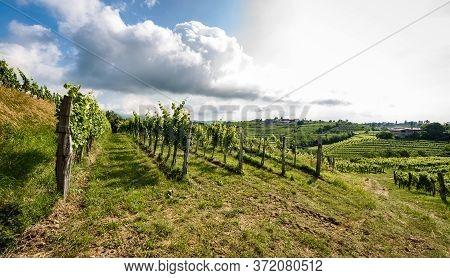 View Of Famous Wine Region Goriska Brda Hills In Slovenia.