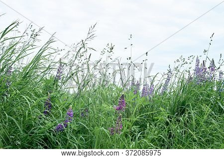 Wildflowers, Green Grass And The Sky.expanse. Natural Beauty.