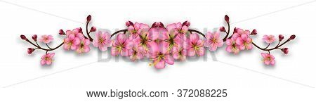 Element Of Cherry Blossom Branches. Line With Flowers And Buds Isolated On A Transparent Background.