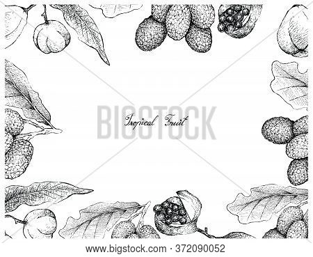 Tropical Fruit, Illustration Of Hand Drawn Sketch Pittosporum Crassifolium Or Karo And Korlan Or Nep