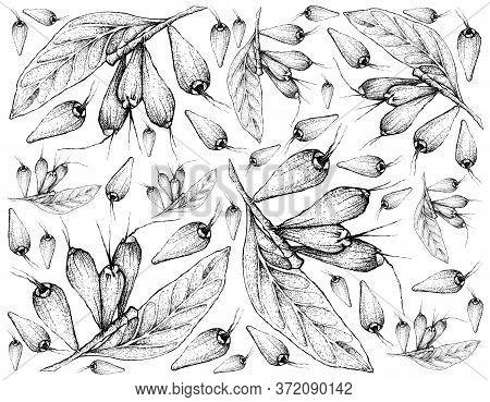 Tropical Fruits, Illustration Wall-paper Of Hand Drawn Sketch Giant Lau Lau Or Eugenia Megacarpa Fru
