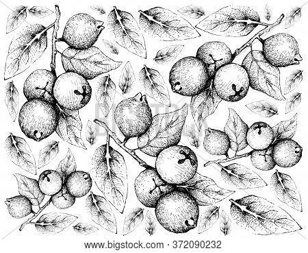 Tropical Fruits, Illustration Wall-paper Of Hand Drawn Sketch Lemon Guava Or Psidium Littorale Fruit
