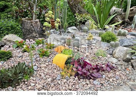 Rockery In The Garden With Stones And Variety Of Different Flowers And Plants. Landscape Design Of T
