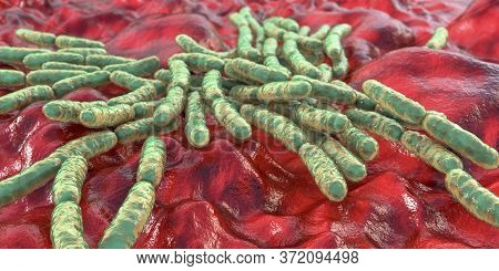 Probiotic Bacteria Lactobacillus, 3d Illustration. L. Acidophilus, L. Helveticus And Other. Normal F