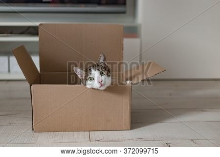 European Cat In A Delivery Box. The Concept Of Buying A New Home Or Relocation. Pet Sitting In A Car