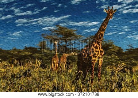 Giraffes On The Thicket At The Serengeti National Park. A Conservation Area In The African Savanna W