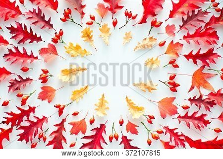 Autumn Leaves, Flat Lay, Top View In Red And Orange Tones On White Background. Autumn Leaves, Flat L