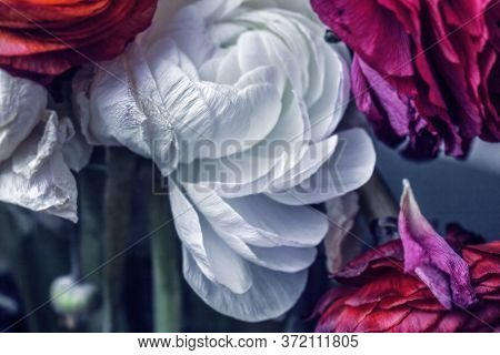 Great Beauty White Withering Ranunculus For Solemn And Unforgettable Moments