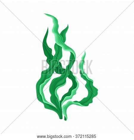 Underwater Seaweed Or Algae Growing On The Ocean Bottom Vector Illustration
