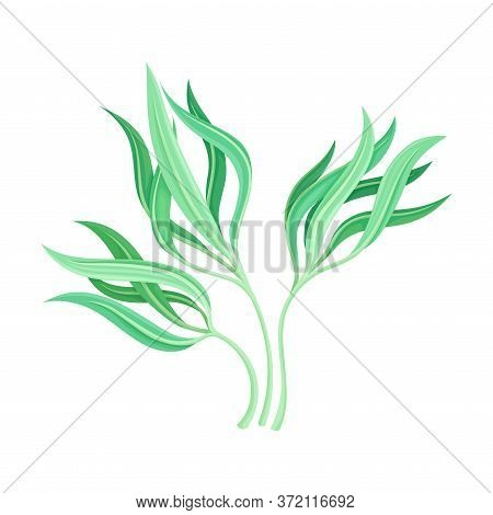 Marine Colorful Algae With Pointed Leaves Vector Illustration