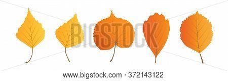 Vector Autumn Leaves Set Isolated On White Background.