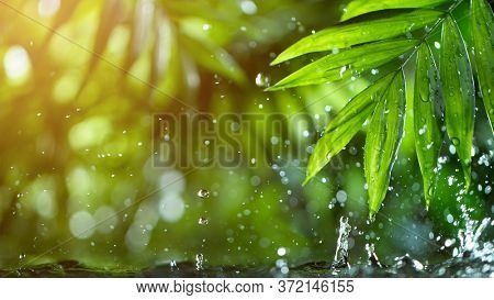 fresh green leaves with water drops over the water , relaxation with water ripple drops concept