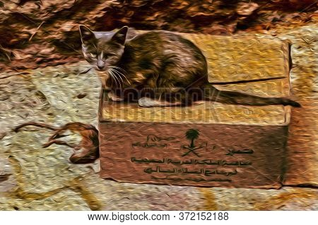 Cat On Top Of Card Box With Dead Mouse In The Old Medina Of Fez. With Its Old Tanneries And Large Me
