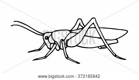 Grasshopper Line.eps