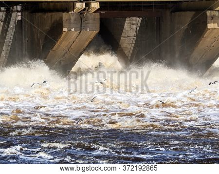 Water Discharge At A Hydroelectric Dam. Seagulls Fly Over A Raging River. The Water Is White With Fo