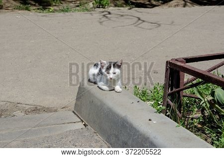 Street Kitten With A Sore Right Eye. Two-tone Kitten Basks In The Sunshine On A City Street. Homeles