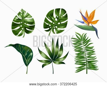 Vector Tropical Trendy Summer Palm Leaves And Flower, Jungle Leaves, Split Leaf, Philodendron Leaves