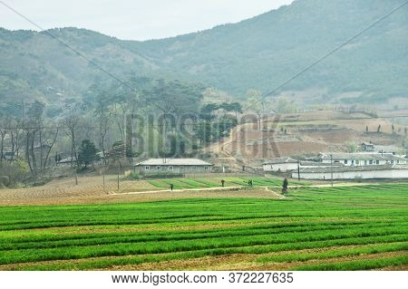 North Korea Landscape. Mountains, Village And Agriculture Fields In Foreground. Peasants Gathering T