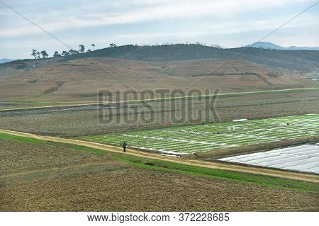North Korea Landscape. Mountains, Dirt Road And Plowed Agriculture Fields In Foreground. Peasant Man